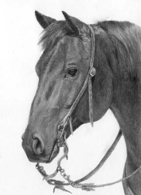 western horse, graphite drawing, Kathrin Guenther, web file