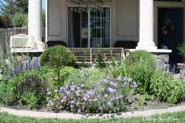 photo of blooming herb garden