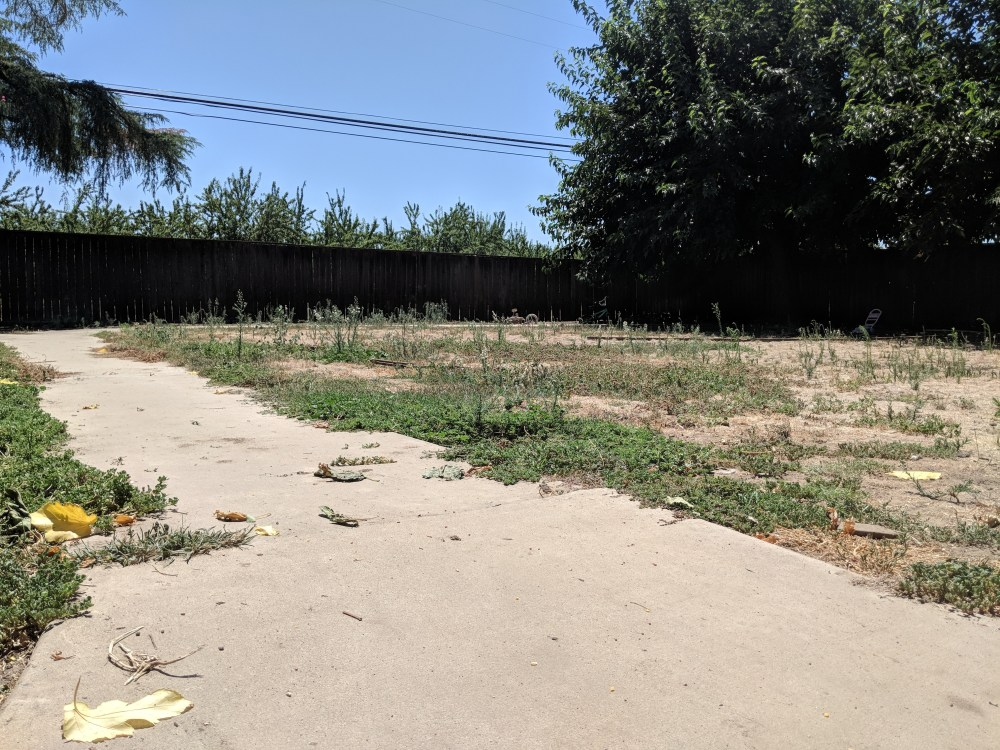 Dusty, fenced backyard with cement path and weeds