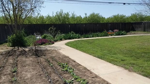 Landscape with cut flower garden and seedlings