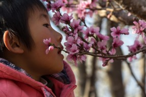 Four-year old Amy is held up by a teacher so she can smell the beautiful flowers.