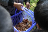 Local people often come to the mountains to harvest wild mushrooms.