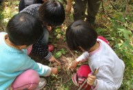 After learning to recognize edible mushrooms, the children find a patch on the forest floor.