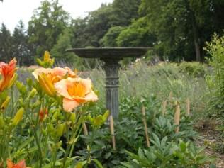 More Biltmore Gardens