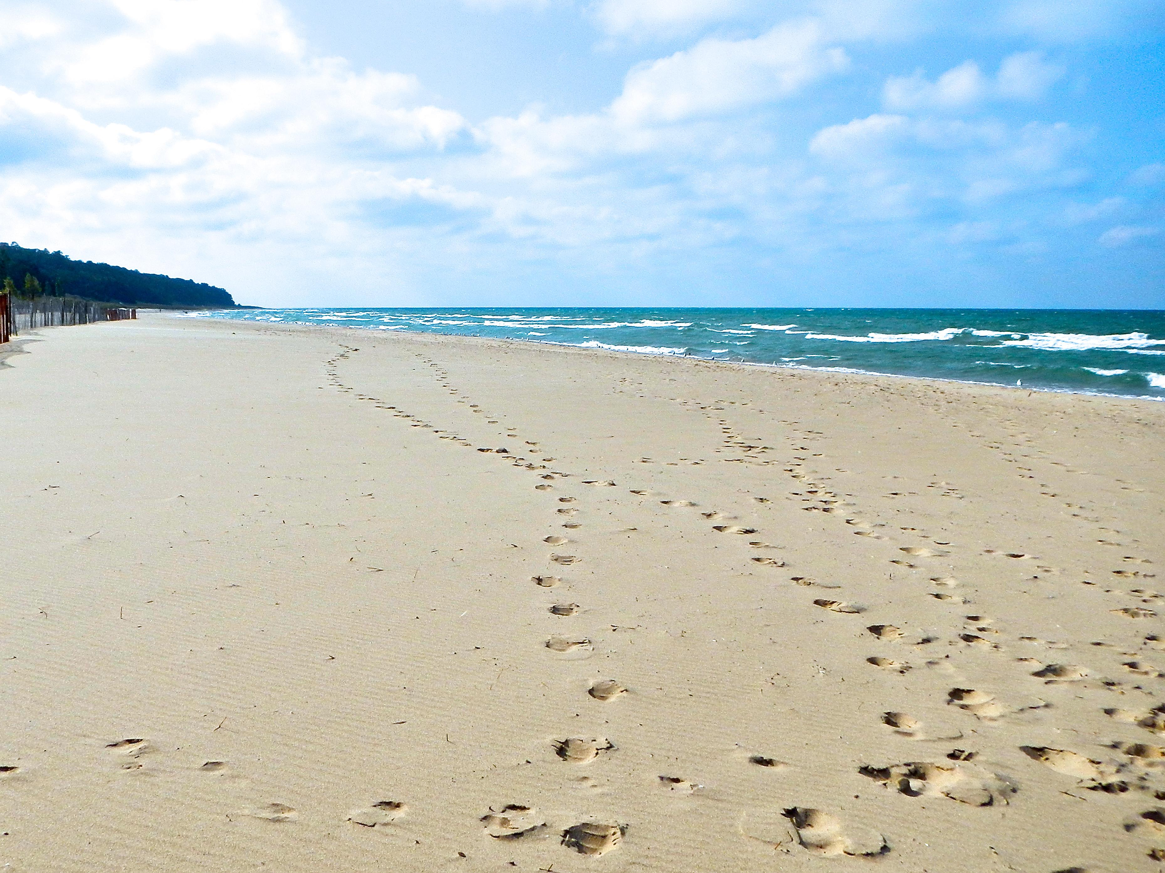 Oval Beach Saugatuck  Summer Setting