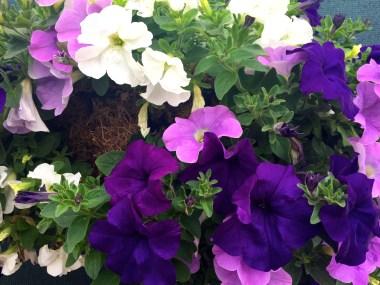 The colors of Wimbledon