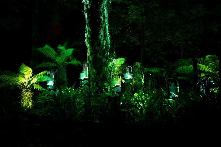 swanees_NZ1_photoKathyHinde_small