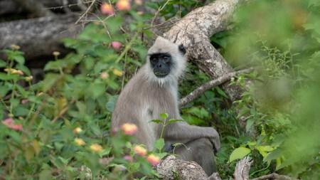 monkey2small