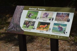 Animal Tracks Sign