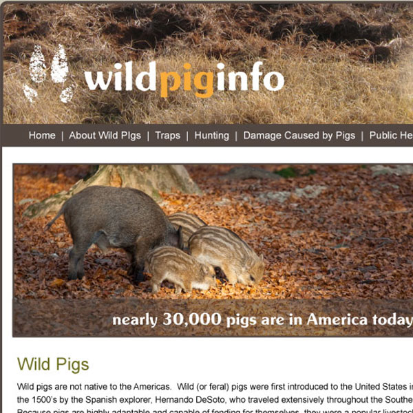 Wild Pig Info Website