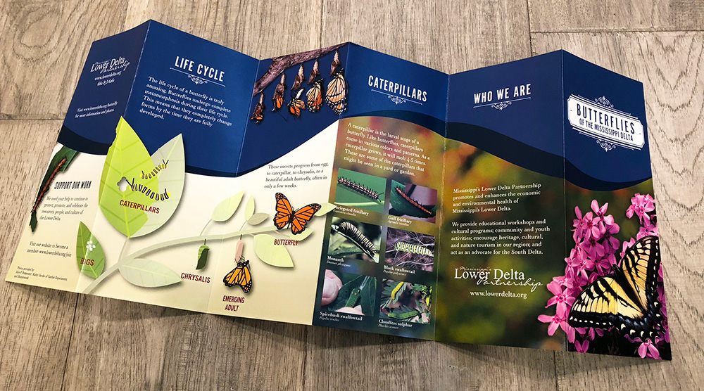 Butterflies of Mississippi Delta Brochure Designed by Kathy Jacobs Design & Marketing