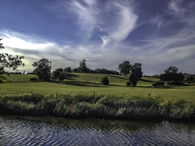 Rushes along a canal in the UK
