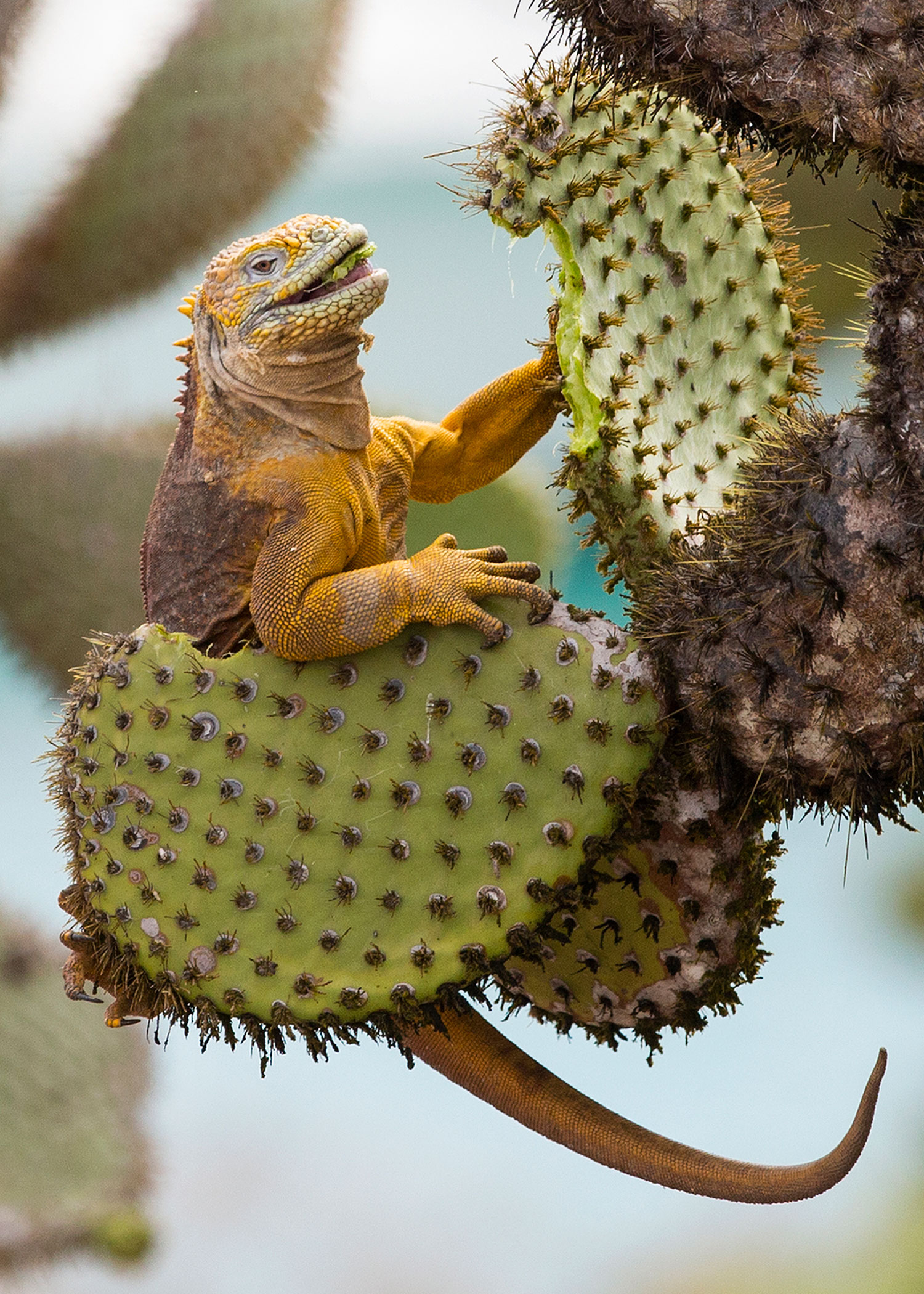 Reptiles Amphibians Crustaceans Insects Spiders