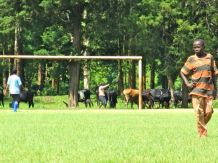 Soccer on the Catholic fields. Our goalie, and cows grazing at the goal posts