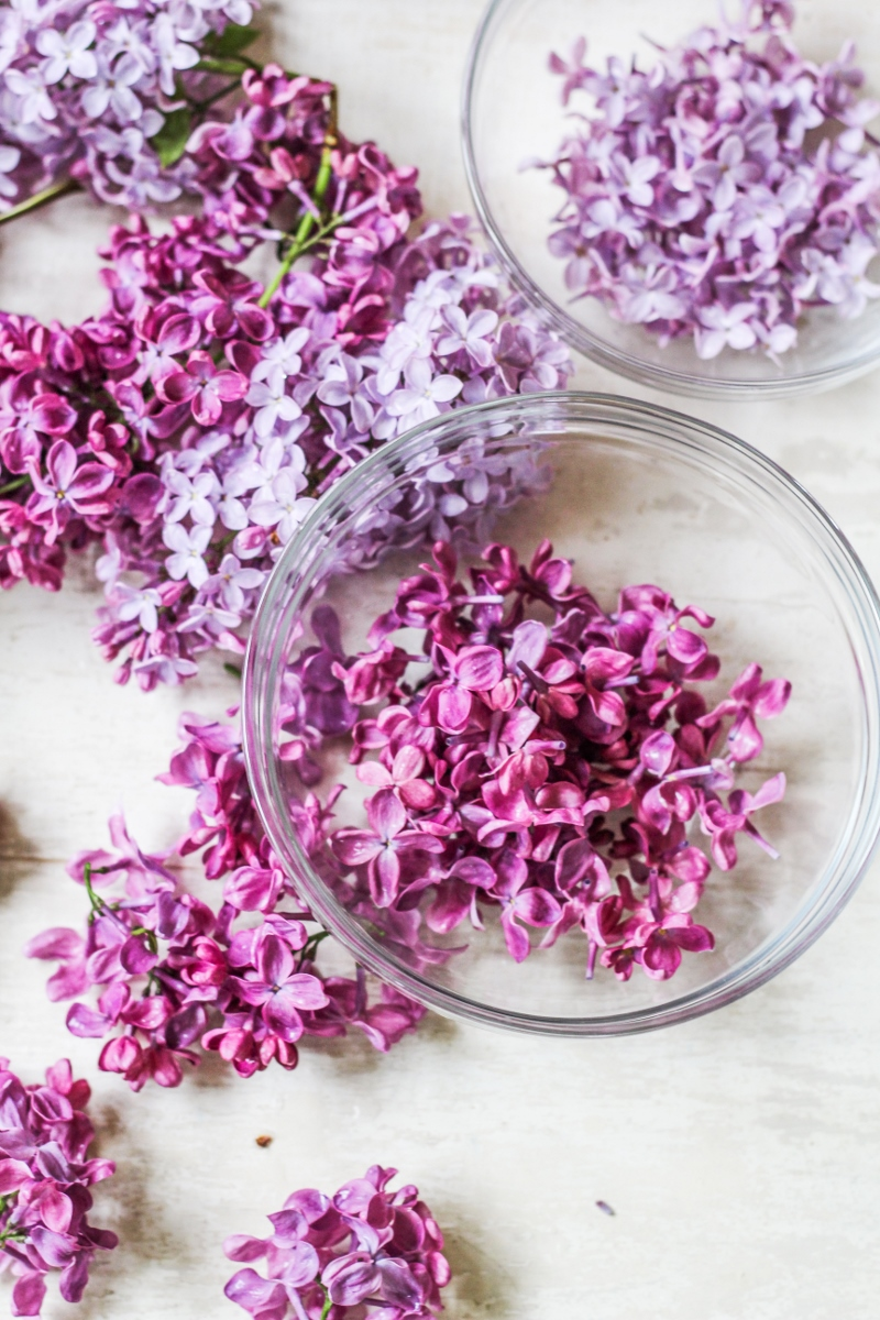 Prepping Lilacs for Baking {Katie at the Kitchen Door}