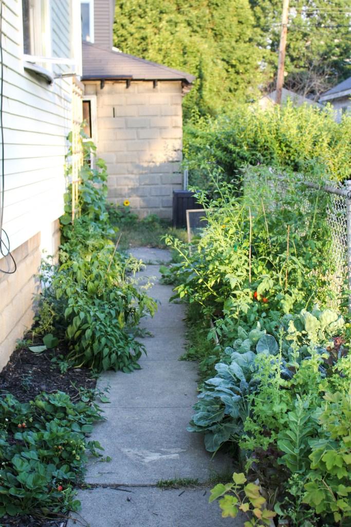 Urban Garden {Katie at the Kitchen Door}