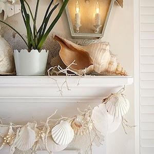 Katie Brown 20 Simple Ways To Display Sea Shells
