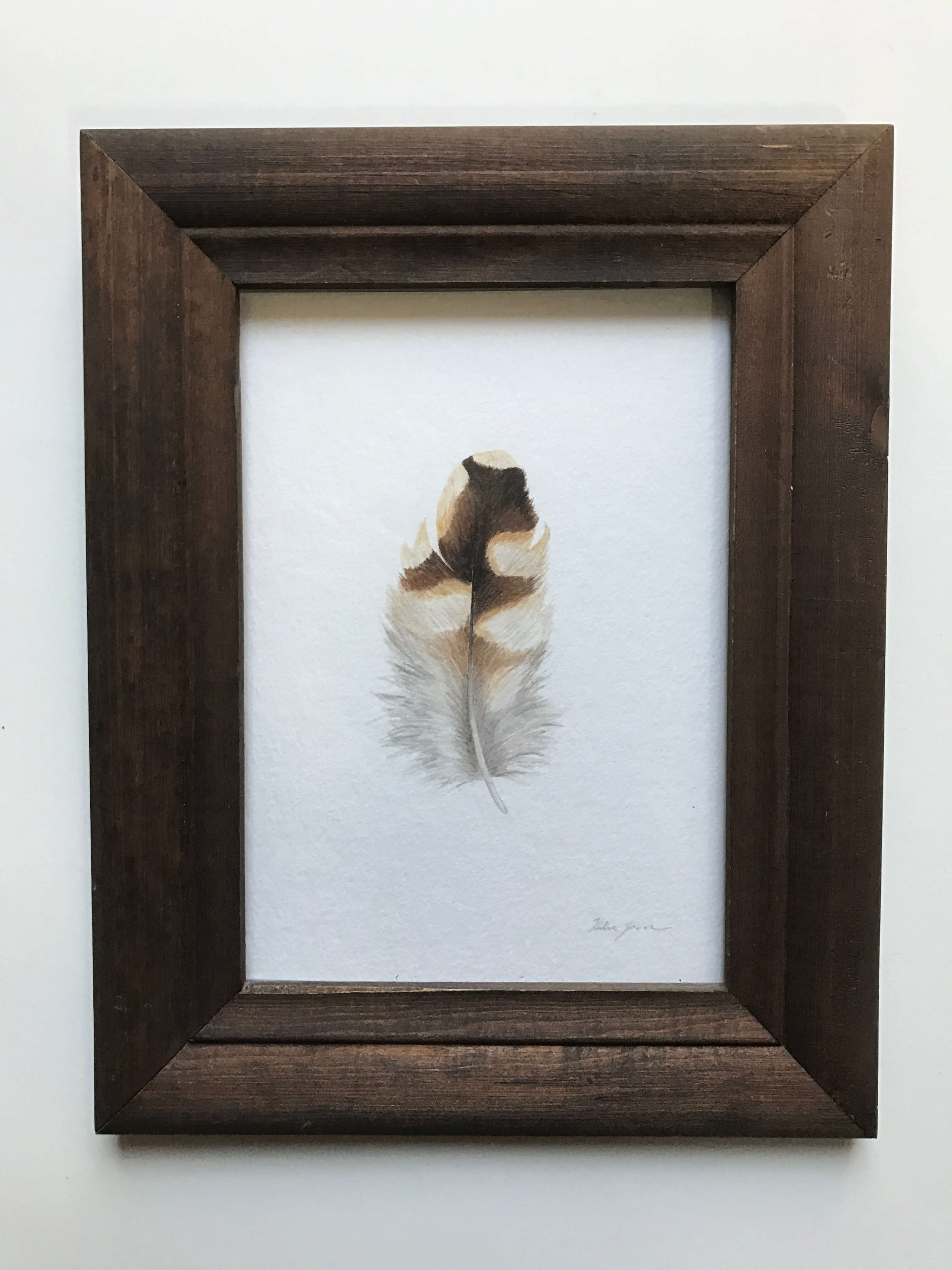 """Cooper's Hawk Feather/ Watercolor In A Vintage Gold Painted Frame/ 7 1/2"""" X 9"""" / $165"""