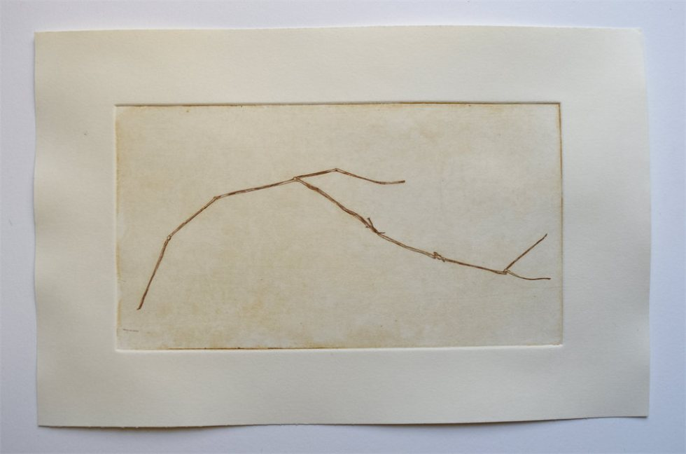 """Grass Stalk, 11"""" x 7"""", etching, edition of 4, $55"""