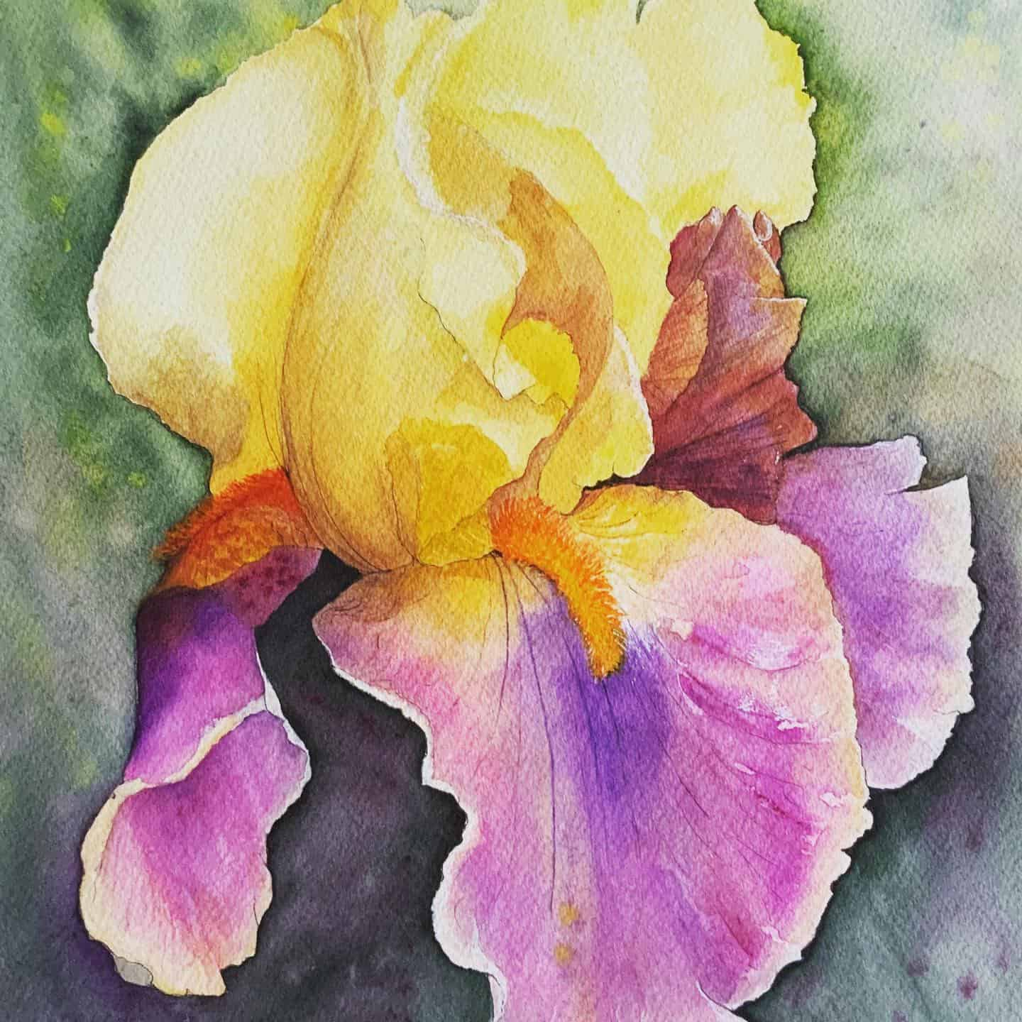 Bearded Iris flower Watercolour Painting