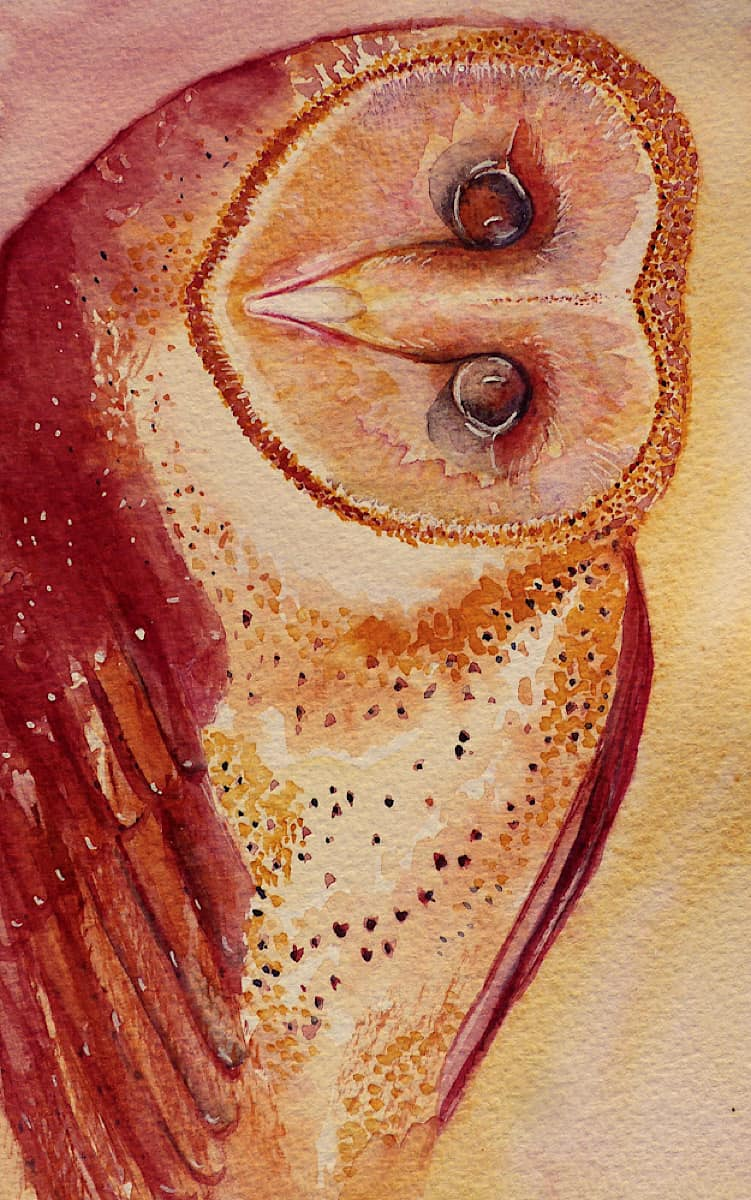 Barn Owl with his head turned watercolour painting in orange, burnt sienna by Katie Lloyd