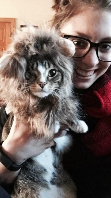 Lion Kitty!
