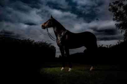 equine photographer black background hambleden studio lit