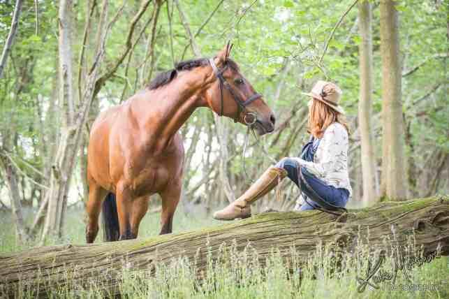 equine equestrian horse portrait wiltshire hampshire devon somerset