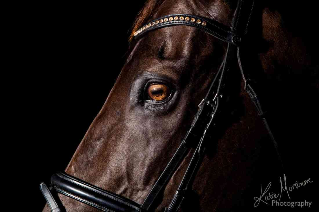 equine photographer wiltshire hampshire black background studio lit