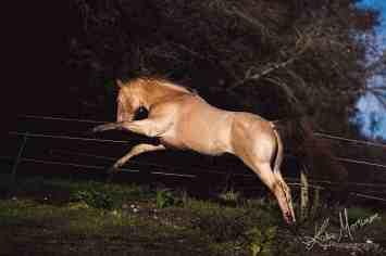 fine art equine print wiltshire hampshire photographer photograph