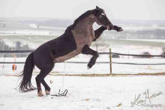 Photoshop horse snow rear