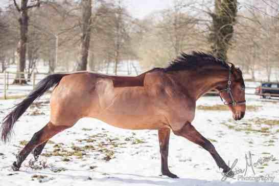 horse snow play photoshop
