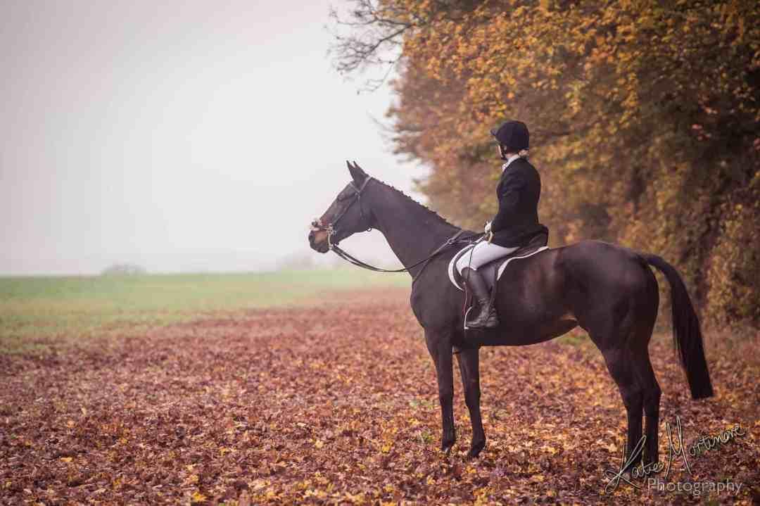 horse equine portrait wiltshire hampshire katie mortimore autumn
