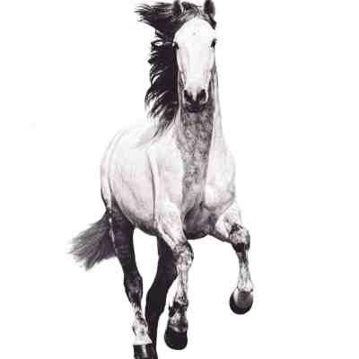 equine equestrian fine art photographic print