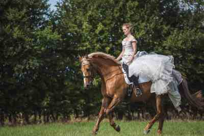 Vicky-Pete-cherish-dress-equine-canine-session-103
