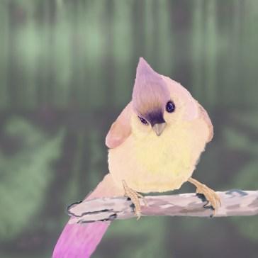 Sunrisebird_KPylman_Thumb