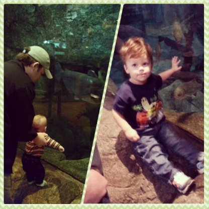 We did end up at Bass Pro Shop down the freeway a bit. The left was Jude's first visit to their aquarium and the right was this week. Crazy how fast they grow!