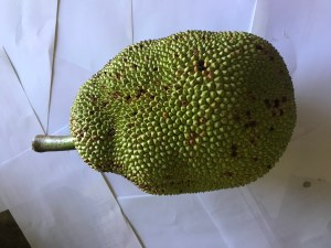 fresh green jackfruit