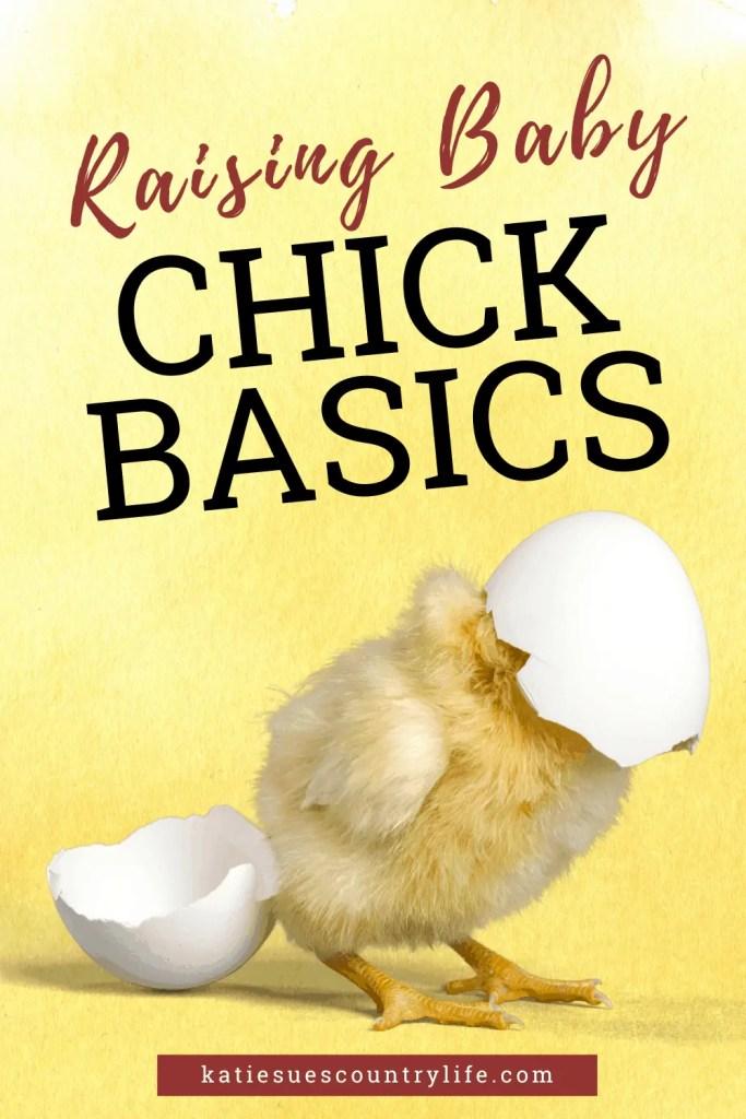 Raising Baby Chick Basics