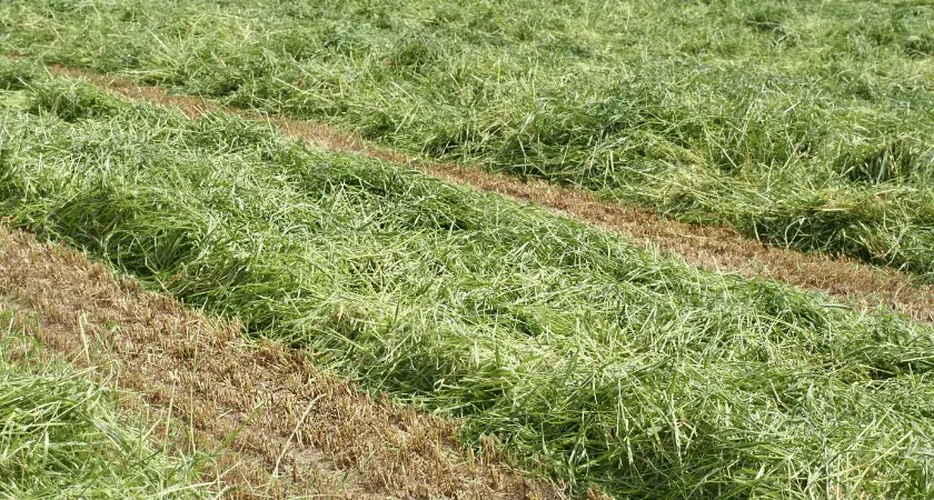 Hay! What is it?   Alfalfa