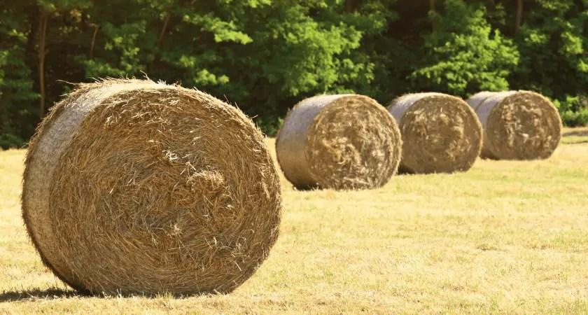 Hay Bale Basics | Round Bale