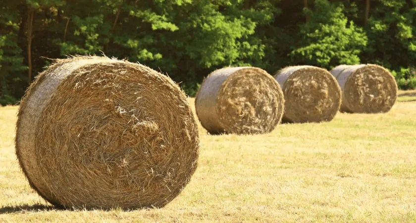 Hay Bale Basics   Round Bale