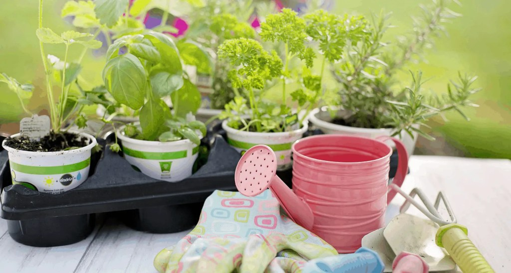 What you need for DIY Herb Garden Container
