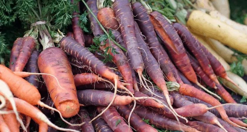 Purple Carrots | Heirloom Vegetables