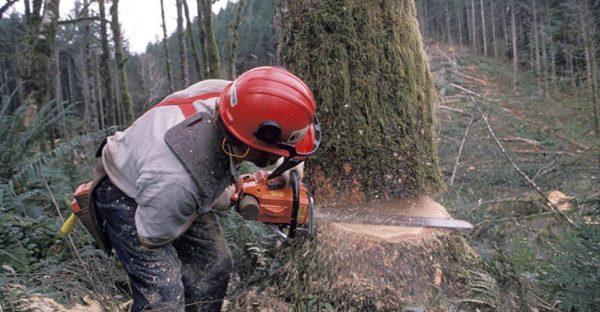 penebang pohon