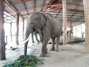 เที่ยวปางช้างมหาสารคาม