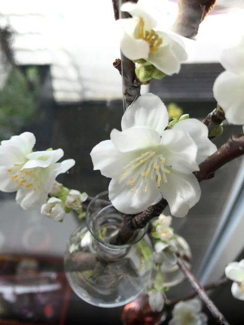 Die Kirschblüten schweben in der Vasengirlande am Fenster.