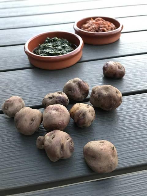 Die kleinen schrumpeligen Kartoffeln werden speziell für Pappas Arrugadas angeboten.