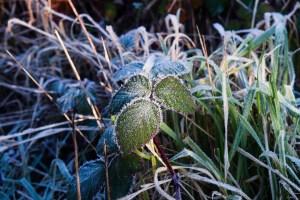 Frosty December Morning - Kat Naish Photography