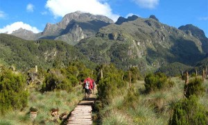 Mountain Rwenzori Hiking Safari Uganda